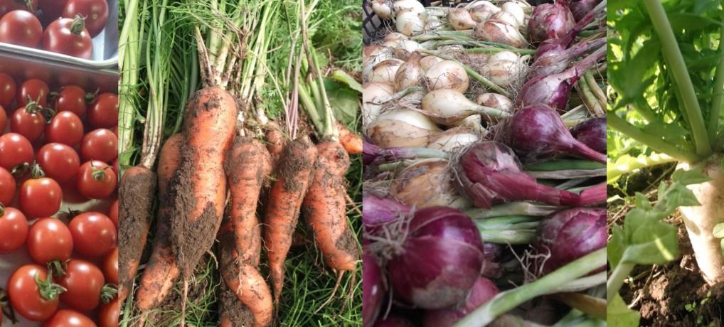季節を彩る、多種多様な野菜たち