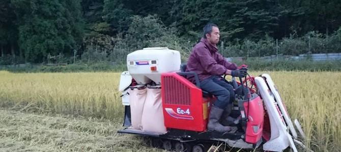 秋冬野菜の準備と、晴れ間をぬっての稲刈り