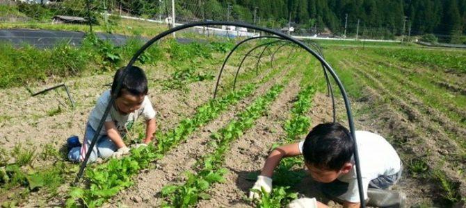 農作業日和! 子たちとお野菜のお世話。