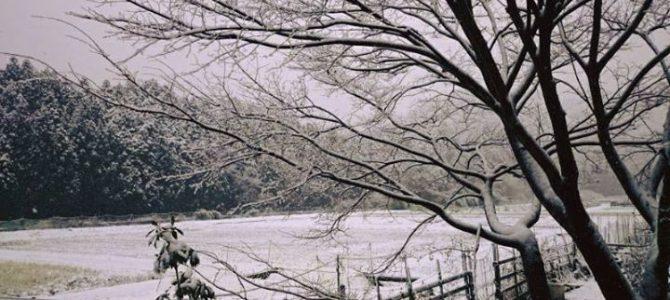 昨日、初雪、と思ったもつかの間、