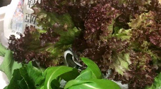 キッチン・ハリーナさんがお野菜の写真をアップしてくださいました。
