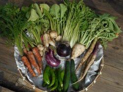 「山里のおすそわけ単発便:秋野菜」を募集します!