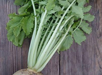 京野菜には、いわゆる地大根がたくさんあり、なかでも有名なのが聖護院だいこん。