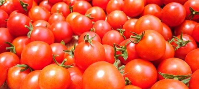 「京てまり」、「新京野菜」のトマトです