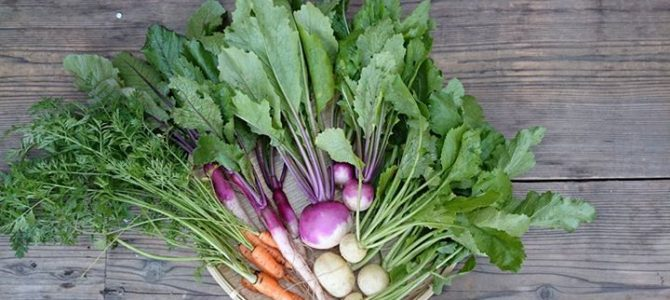 冬野菜もおいしくなってきました。