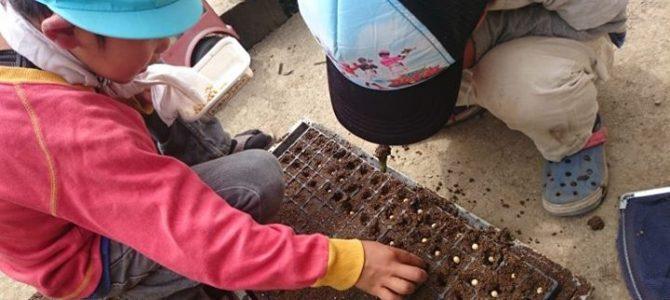 大豆を蒔きました。