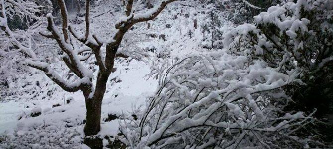 京北、黒田はまた雪景色です。