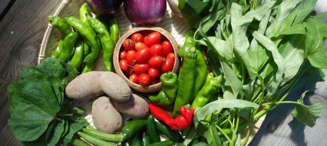 里山のおすそわけ定期便:夏野菜