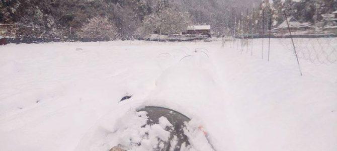 耕し歌ふぁーむの農場のある京北の今朝の気温はマイナス8度、朝9時を過ぎても氷点下の気温が続くまさに大寒波の中にいます
