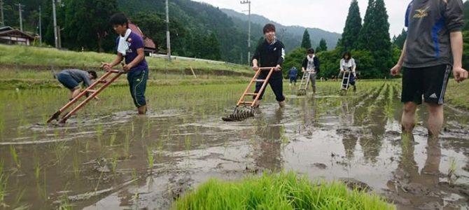 学生さんや留学生さんたちに田んぼ訪問いただき、草取り体験いただきました。